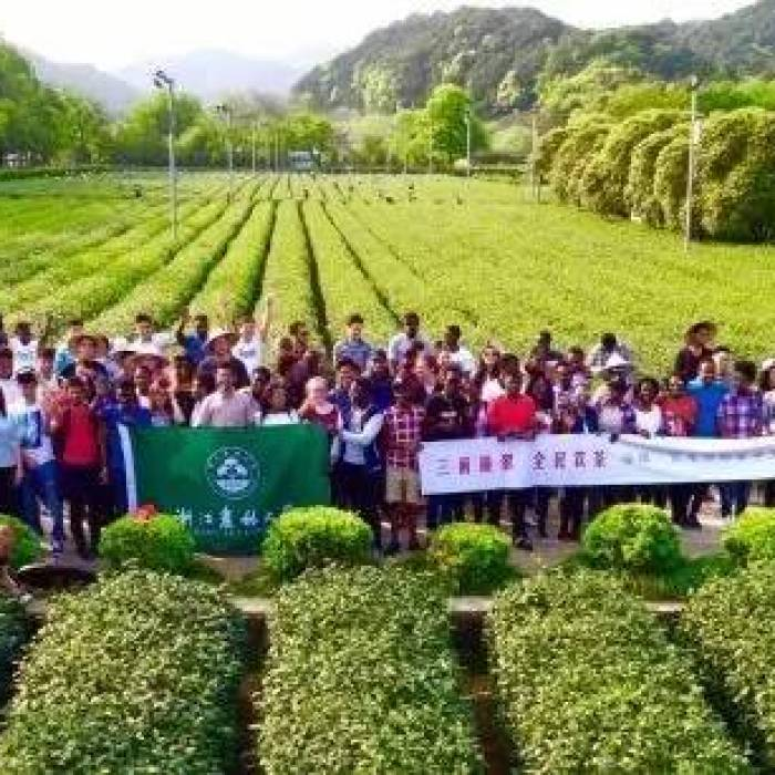 world tea day at chinese international tea promotion base