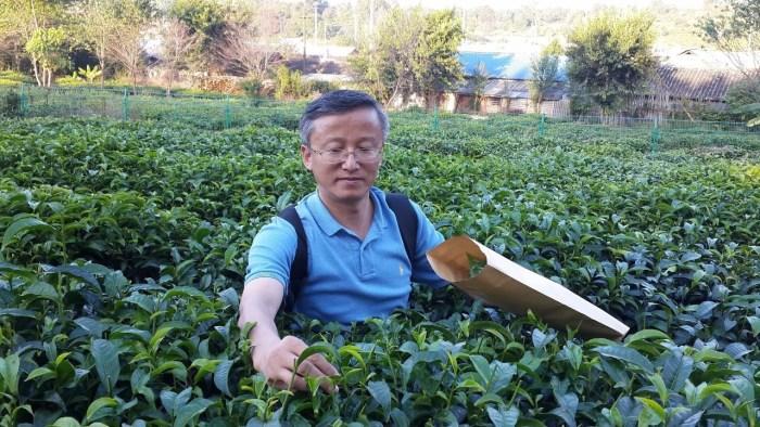 WTeaO.org Prof. Lizhi Gao Tea for a better world