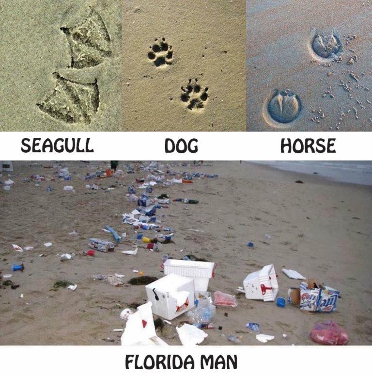 WTF Florida Because Florida