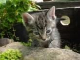 Google Kitten