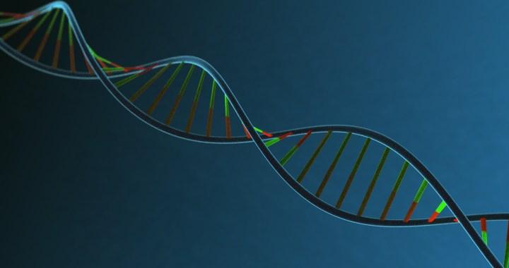Badania autosomalnego DNA dla genelogów.