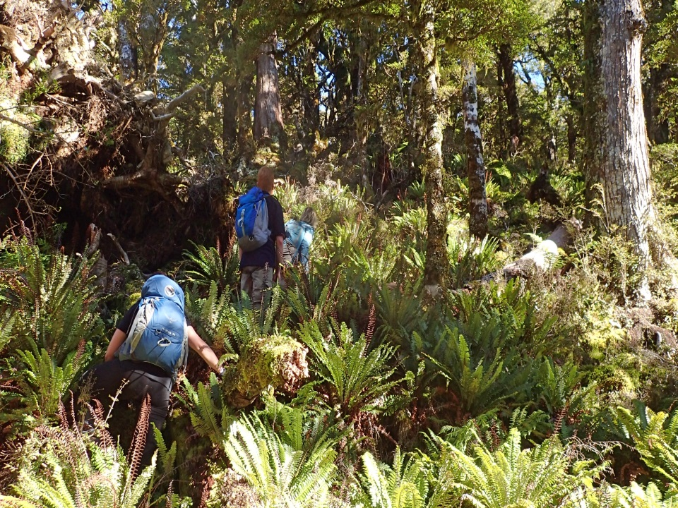 Trampers walking through ferns, Tararua Ranges