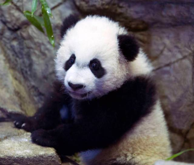 The Easter Bunny Has Hopped Out Until Next Year But Visitors Can Still Catch The Easter Panda At The Smithsonian National Zoos Easter Monday Event