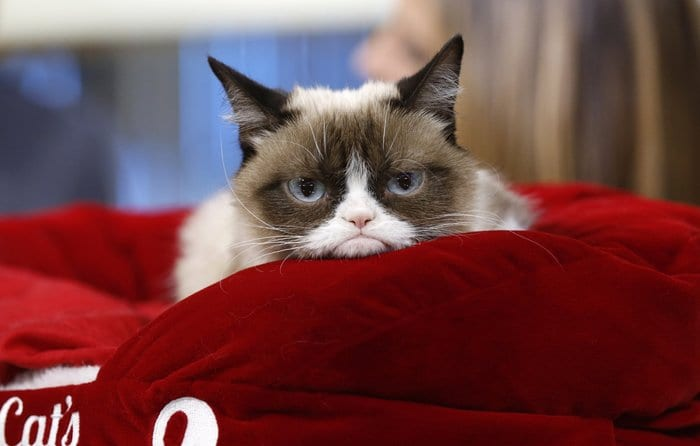 Only in America: Grumpy Cat sues in court to become a puss in loot!