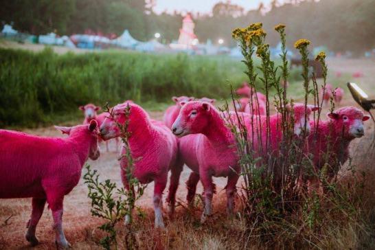 latitude festival faces backlash for animal cruelty