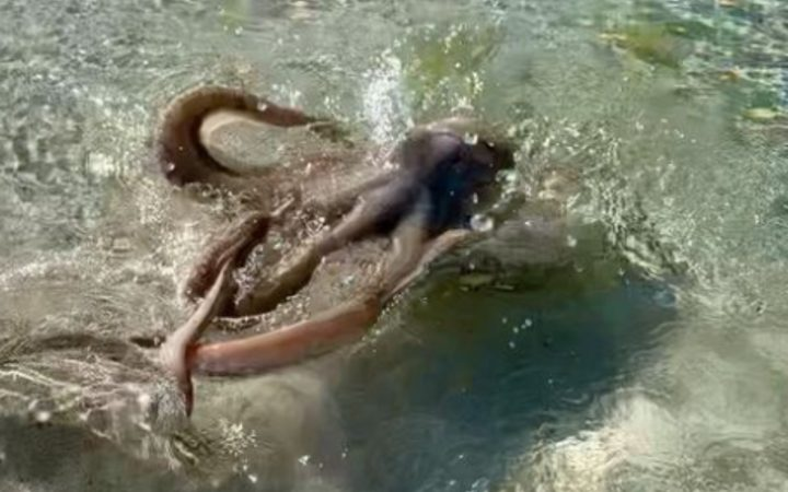 octopus attack - WTX News Breaking News, fashion & Culture from around the World - Daily News Briefings -Finance, Business, Politics & Sports