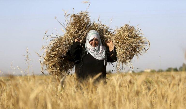 Palestinian farmer in Gaza