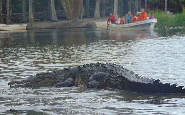 Croc attack witness heard 'crocodile' scream then saw bloodied sister with teeth marks