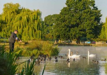 Don't feed the ducks: royal parks warn of bullying bird behaviour after lockdown