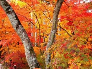 【益曼中醫專欄】秋季養生飲食可以參考唷 @吳大妮