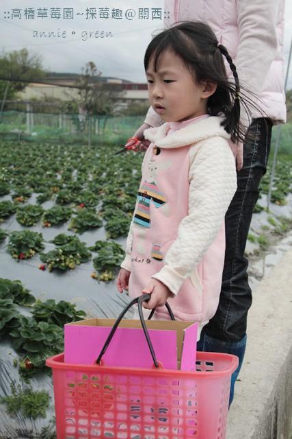高橋草莓園~採莓趣@關西