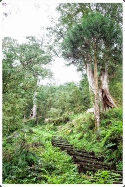 【2014春遊】馬告生態公園-中國歷史名人神木園神木園@宜蘭 @吳大妮。Annie