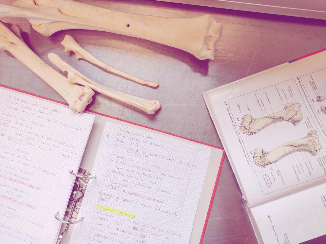 Horrorfach Anatomie? Fazit 1. Semester – Wuide Goas