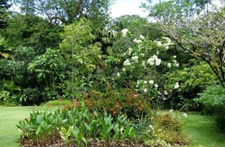 جزيرة النباتات باسوان بالصور