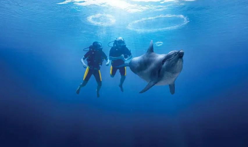 خليج الدلافين دبي