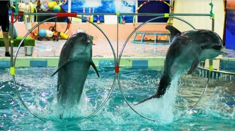 منتجع الدولفين بالبحرين