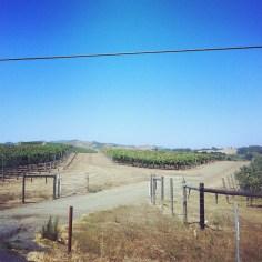Napa Valley - Wundertute