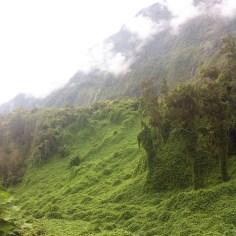 bredesLa Reunion - Wundertute