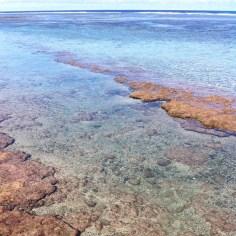 recif La Reunion - Wundertute