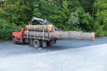 Long Eastern White Pine Logs WunderWoods