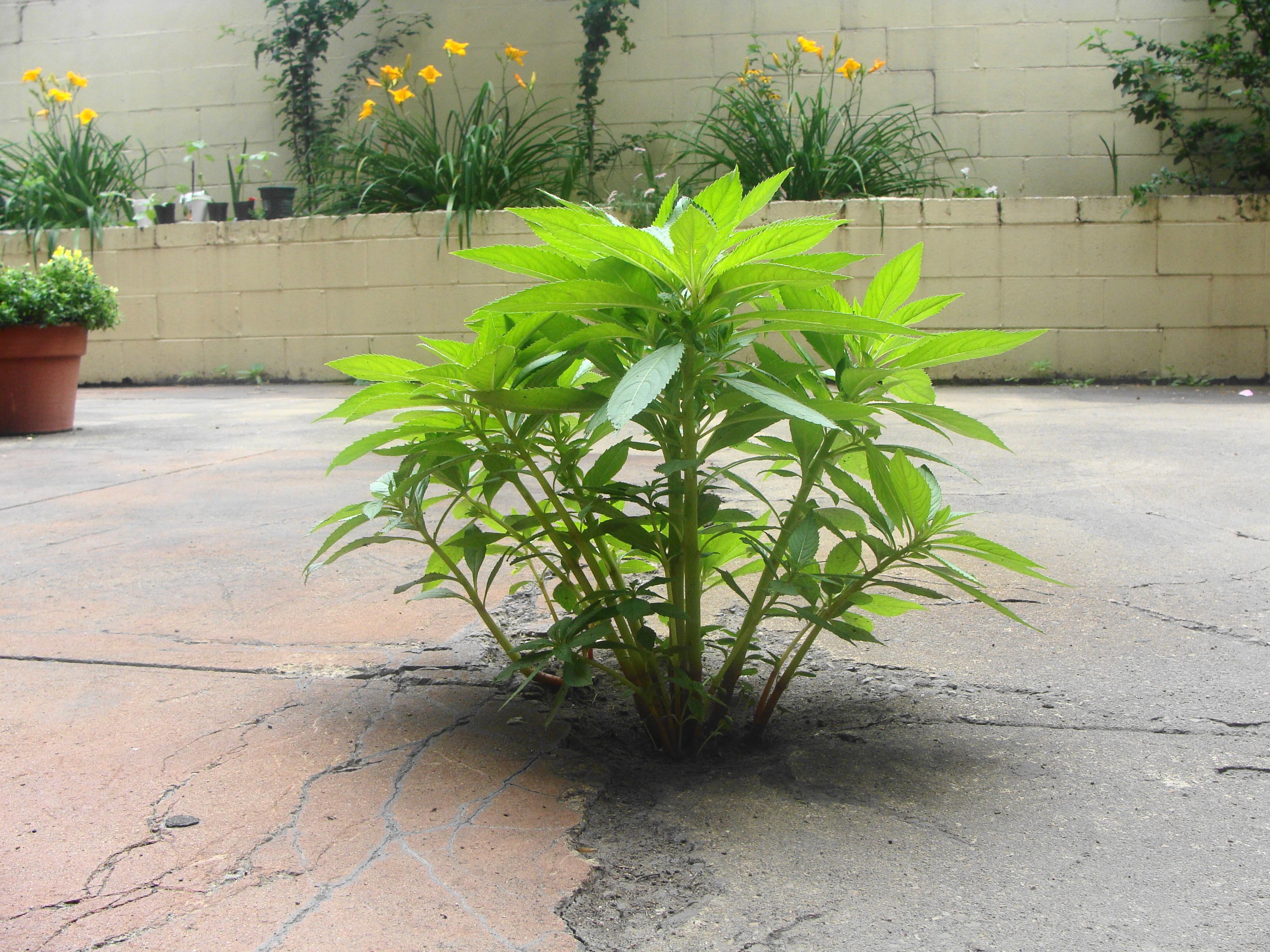 Plug it with a plant.