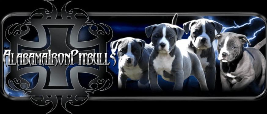 Xxl Blue Pitbull Kennels