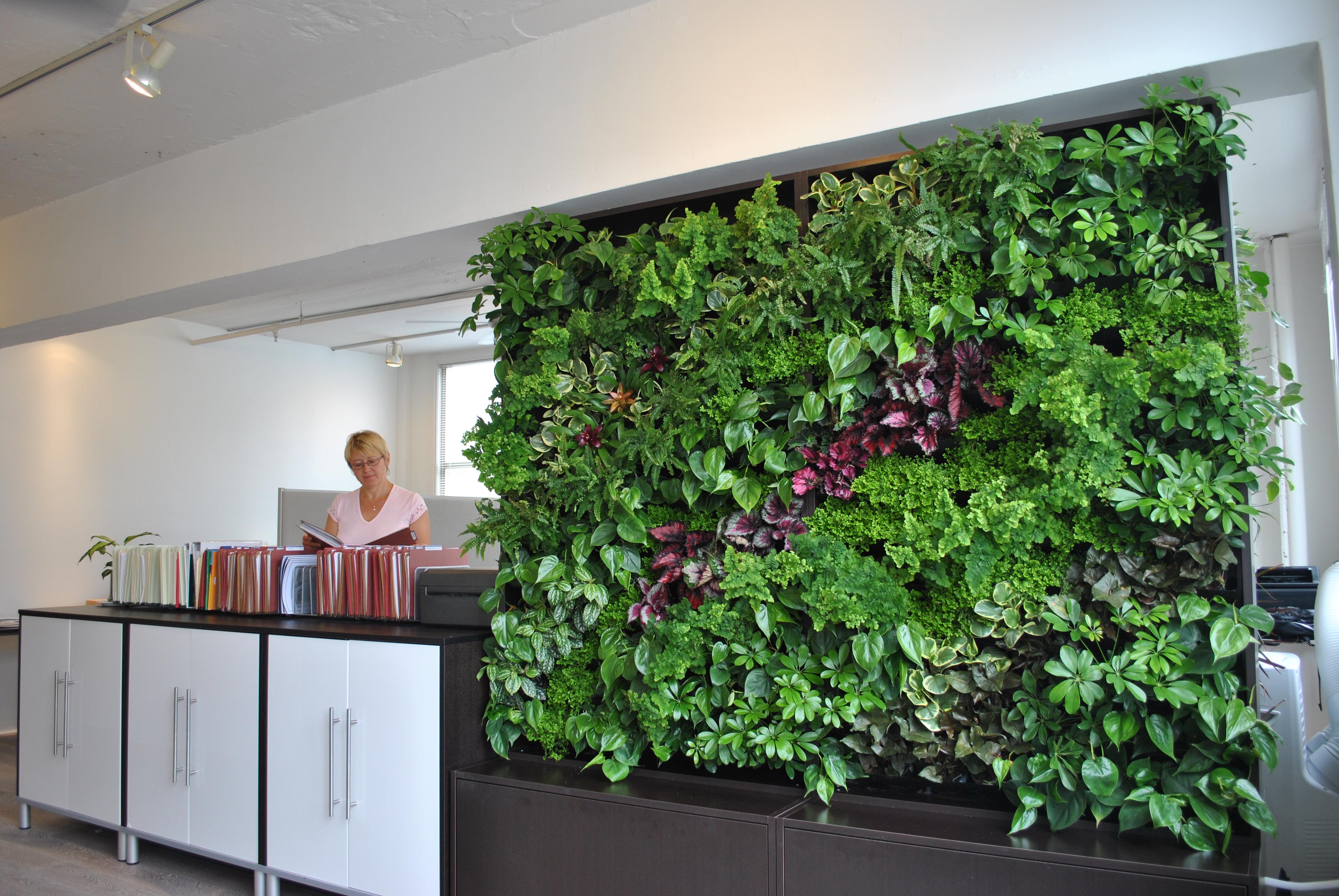 Garden Divider Ideas