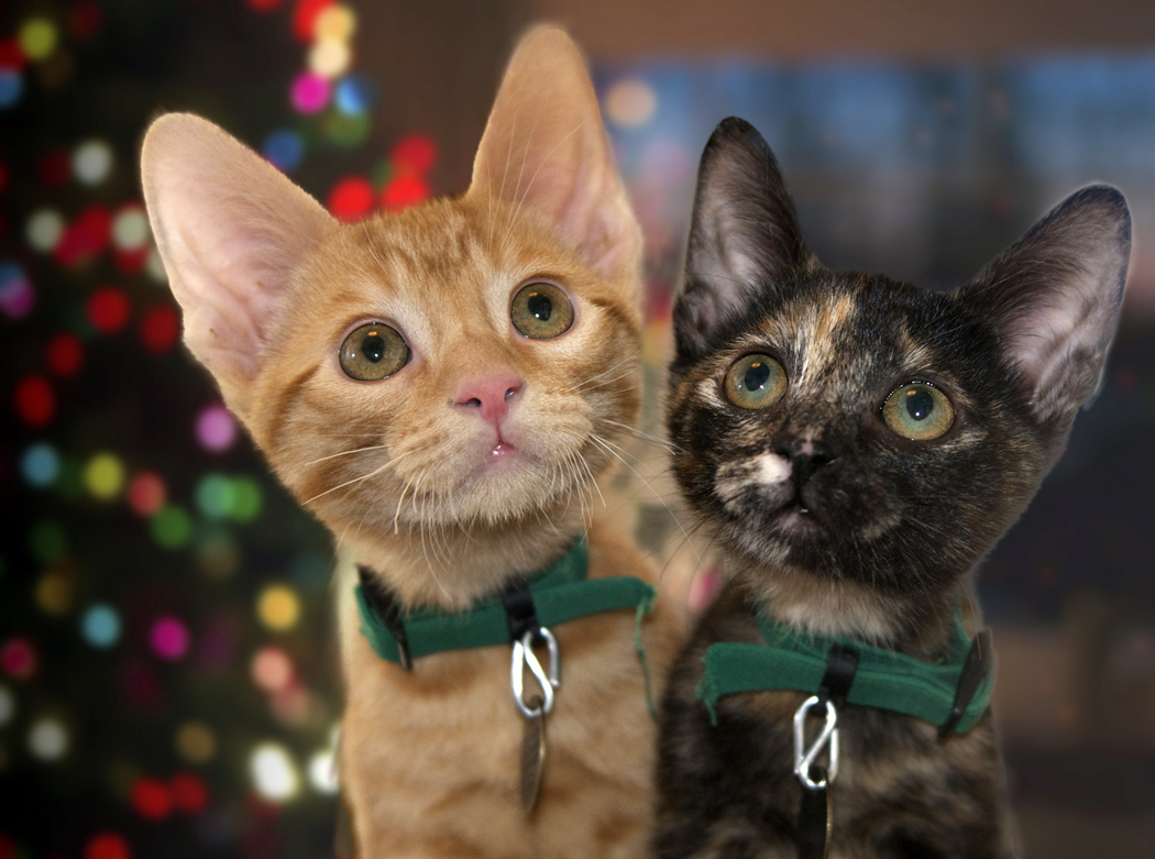 East Bay SPCA Offers Holiday Pet Tips To Help People Keep