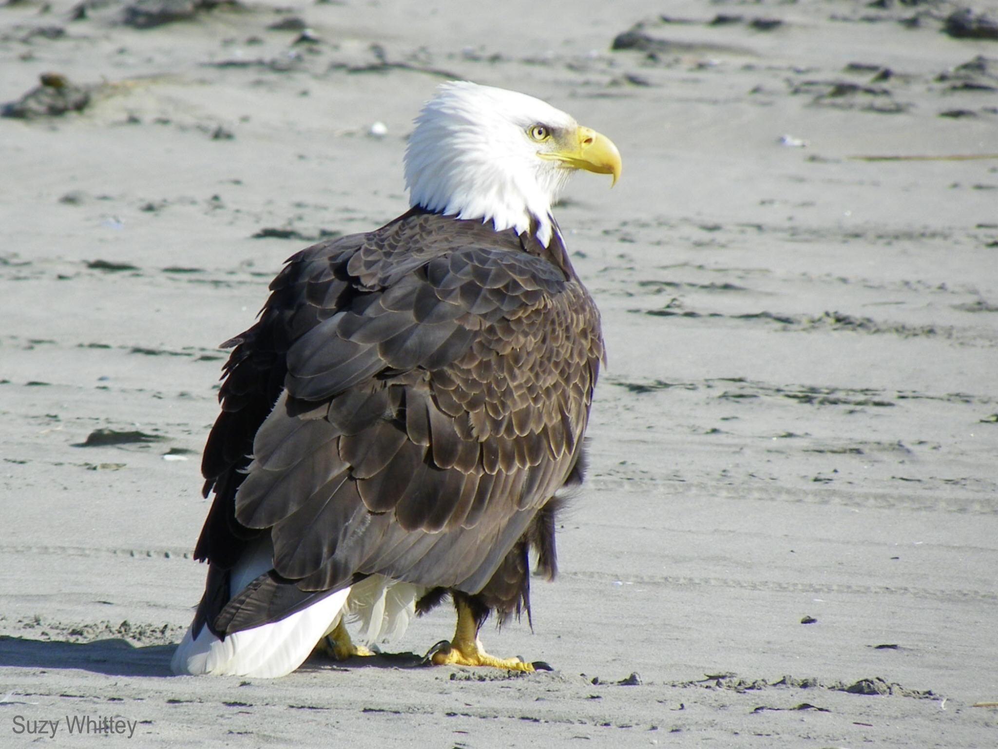 Winter Birds In Washington State