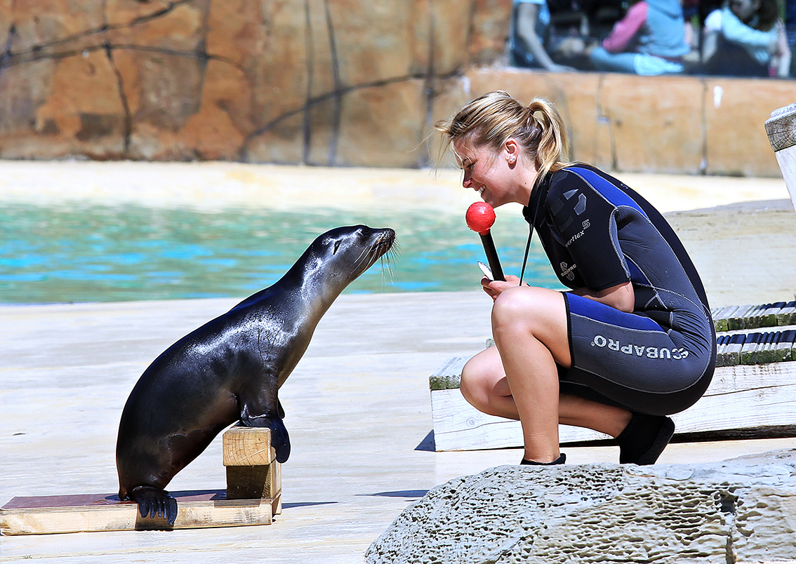 Sealion Pup Can T Wait To Be A Superstar At Blackpool Zoo