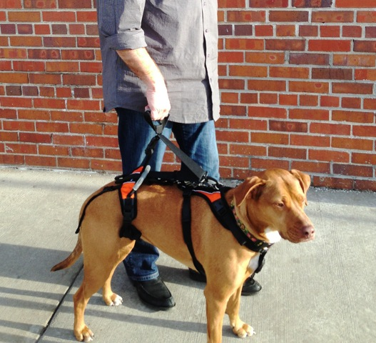 Blue Dog Designs Launches Dog Walking Accessories For The