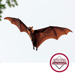 bat in albany ny