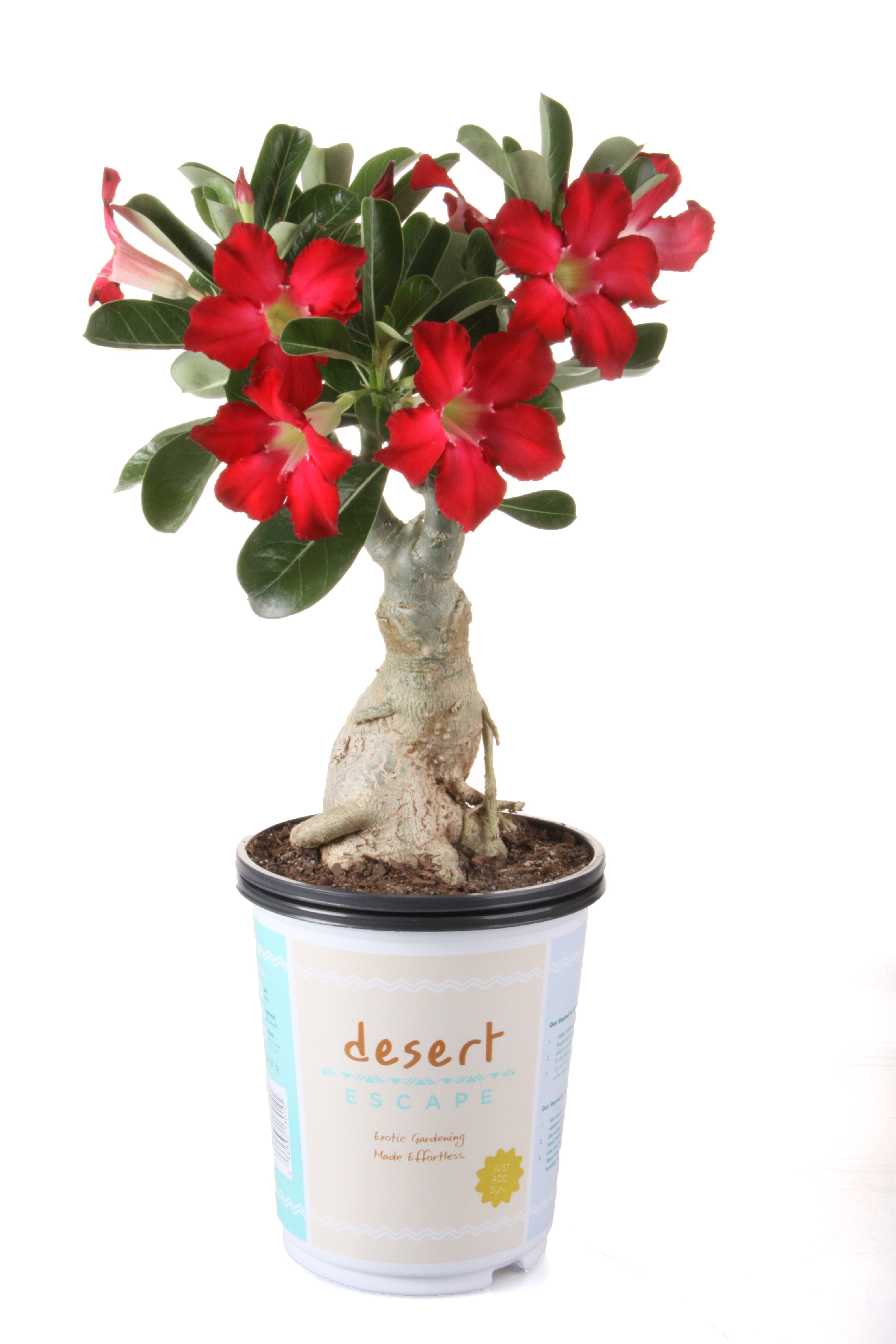 New Desert Escape Plant Collection From Costa Farms Creates Bold Modern Eco Friendly Designs