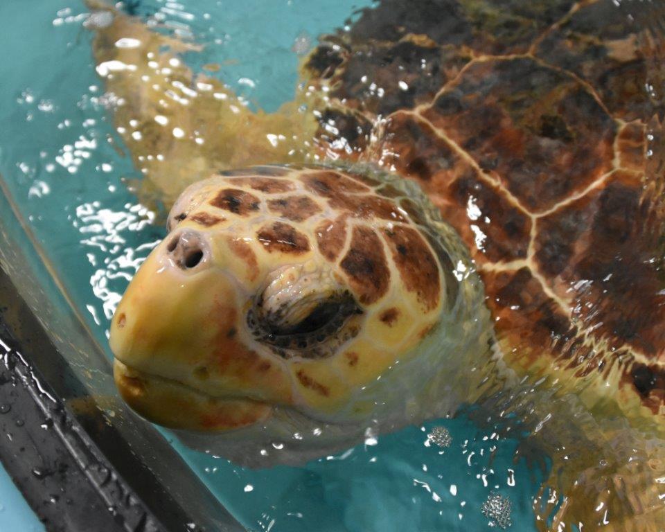 Join The South Carolina Aquarium For World Turtle Celebration