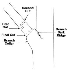 TCIA Three Cuts Diagram