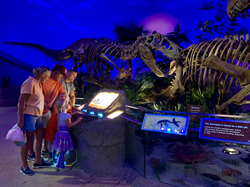 Meet real dinosaur fossils and learn all about their past at The Children's Museum of Indianapolis.