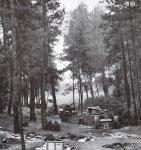 Destroyed Polish tank column.