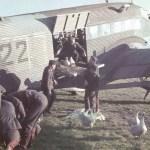 Geese transport