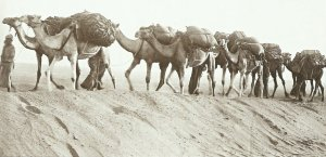 camel supply column