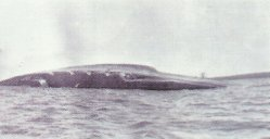scuttling of the battlecruiser 'Seydlitz'