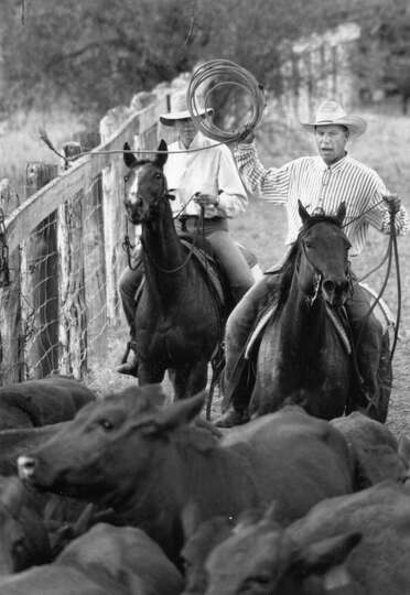 Cowboys Work Cattle On King Ranch 1993 King Ranch