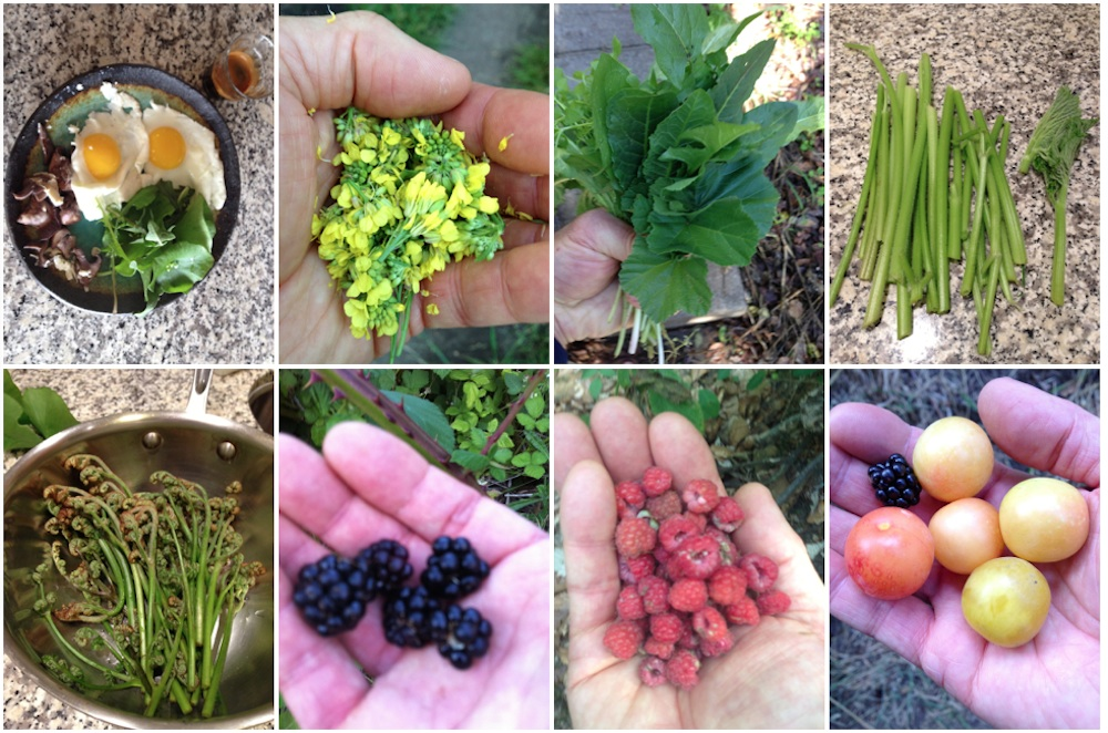Snacking In Between Sidewalks Mapping Abundance Of Wild Edibles In The Bay Area S Food Deserts Kqed