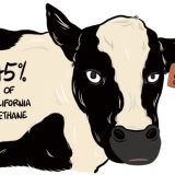 Wrangling the Climate Impact of California Dairy