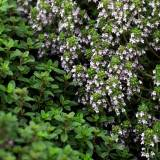 Waste Of Thyme: Why Do We Have To Buy More Herbs Than Recipes Call For?