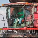 With OK From EPA, Use Of Controversial Weedkiller Is Expected To Double