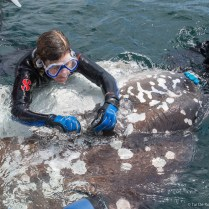 Tierney Thys tags sunfish near the Galápagos Islands.
