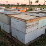 Nearly $1 Million in Stolen Bees Recovered in Fresno