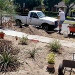 Landscaping for Drought Could Make Warm Nights Cooler