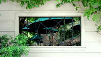 In the Garden With Urban Harvest: Garden walls can provide aesthetic potential - Photo