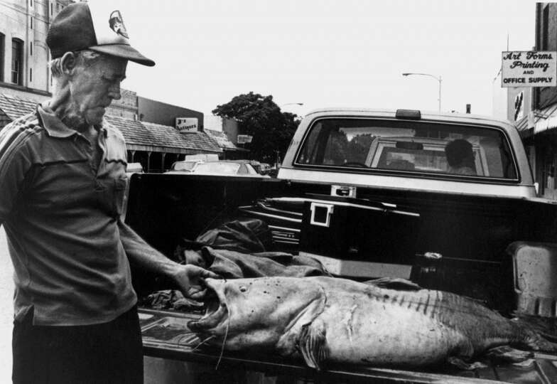 A man stands next to a 98 pound flathead catfish caught on June 2, 1986 near Lewisville, Texas and d
